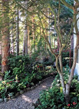 Magical and Magnificent Woodland Garden
