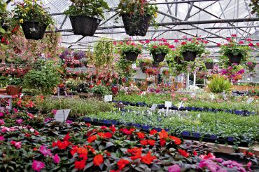 One of the summer greenhouses is chock full of petals and such.