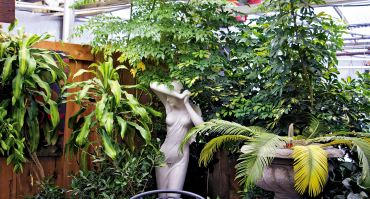 Large houseplants make a statement when grouped with an elegant statuary.