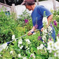 Marilyn Davis, co-owner of The Brothers Greenhouses