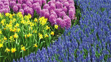 Get The Dirt — Spring Gardens