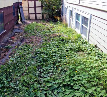 A nasty mix of bindweed, buttercup, dandelions, prickly lettuce and grass overtaking planting areas and a driveway. A patch of weeds run amuck becomes a nightmare to control; weed seeds can remain viable in the soil for years. Avoid the battle and control weeds before they overtake an area.
