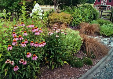 Pink echinacea, white phlox, autumn joy sedum and Bronze Carex