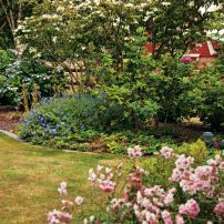 Dogwood surrounded by hydrangea, hardy geranium, rugosa roses and pink shrub roses