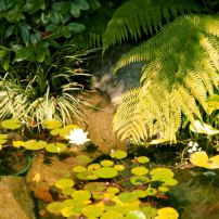 Carex and ferns edge the Peccheninos' pond