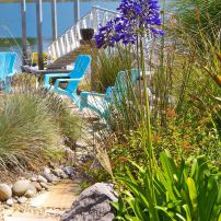 Agapanthus on the path to the Baileys' Wollochet Bay dock