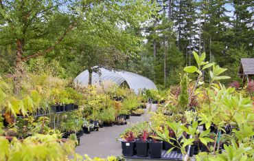 Glenwood Gardens features a wide variety of unusual plants.