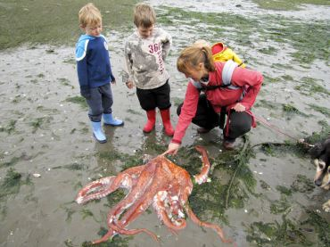 Community Education Opportunities — Lifelong Learning in the West Sound