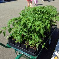 Gig Harbor Farmers Market