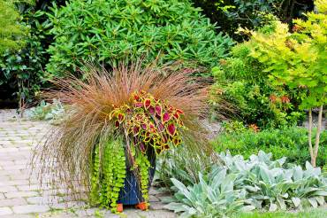 "New Zealand Hair Sedge — Carex comans ""Bronze,"" Coleus — Solenostemon, Golden creeping Jenny — Lysimachia nummularia ""Aurea"""