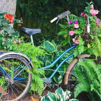 Tricycle planted with begonias, ferns and impatiens