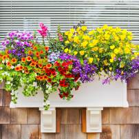 Window box filled to overflowing with pansies, snapdragons, million bells, Lobelia, and bacopa