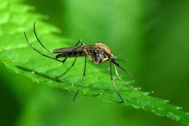 Get The Dirt — Mosquitos