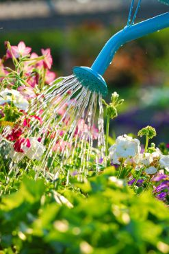 Get The Dirt — Summer Gardening Tips