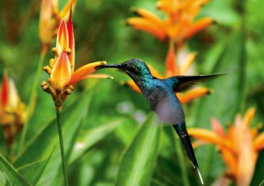 Gardening to Attract Hummingbirds and Butterflies