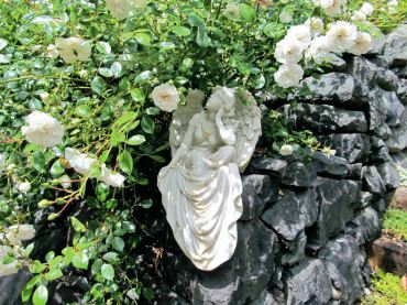 "Heavy blooming ""sea foam"" roses add contrast against a dark rock wall."