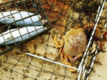 July and August Mean Crab For West Sound Anglers