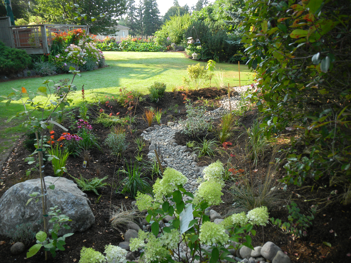 Wshg Net Blog Rain Gardens Add Beauty And Function To