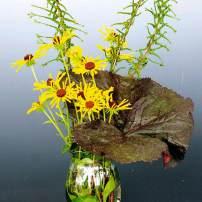 'Henry Eilers' Rudbeckia, 'Dre's Dagger' lady fern and single leaf of Ligularia 'Britt-Marie Crawford'