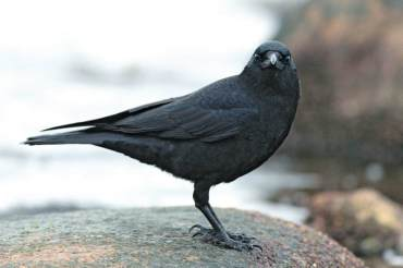 Get The Dirt — Crows