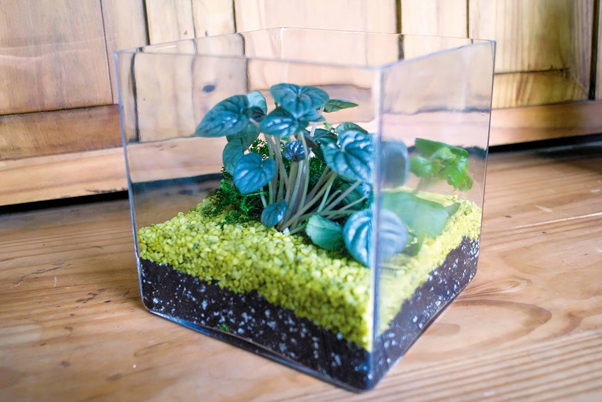 Wshg Net Create Your Own Glass Garden Terrarium Featured The