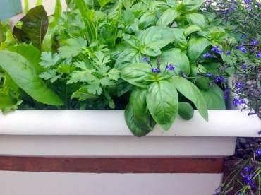 Slug-Proof Salad Box