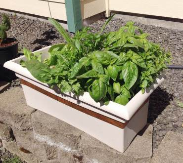 Slug-Proof Salad Box
