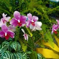 Tips for Creating an Ageless Garden