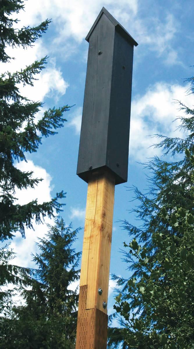 Wshg net build a better bat house featured the garden for Bat condo