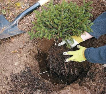 Tips for Planting Out of Season