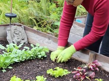 Gardening With Peg