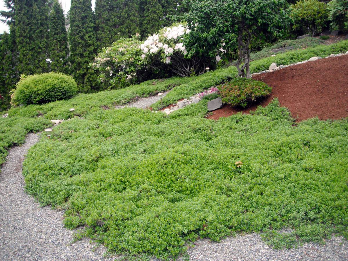 Wshg net blog want carefree gardening tips for ecolawns for Best low growing groundcover for full sun