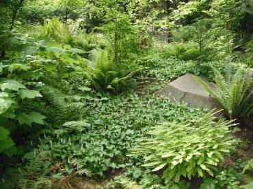 A native woodland garden
