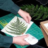 The Art of the Herbarium