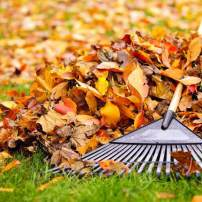 Fall Yard Leaf Management