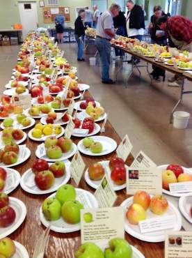 Peninsula Fruit Club Fall Fruit Tasting Show Apples