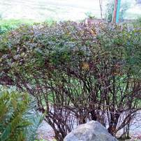 Use Nature as Inspiration for Pruning