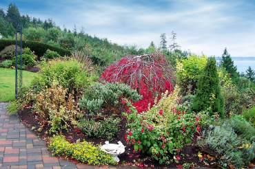 Renovating a Collector's Garden