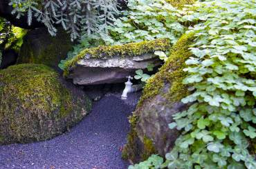 Oxalis thrives in shady rocks around a hosebib.