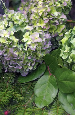 Dried mophead hydrangeas add a bounty of color and texture to arrangements.