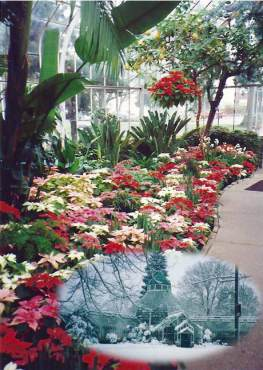 Victorian style W.W. Seymour Botanical Conservatory in winter, 1989-91