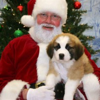 Santa With Doggy