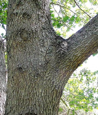 How to Care for Your Garden's Asset — Trees