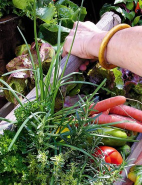 Garden to Table — Vegetables in Small Spaces