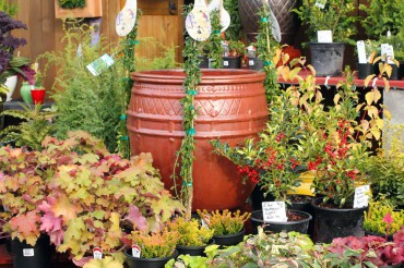 Kingston Henery Hardware in Kingston displays shrubs, trees and perennials that brighten the winter garden.