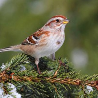 Bird Seed Christmas Tree