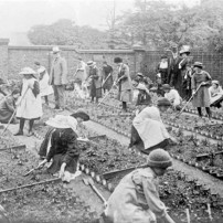 Community gardening from 1890-1910