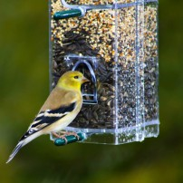 Backyard Bird Feeding Makes A Difference