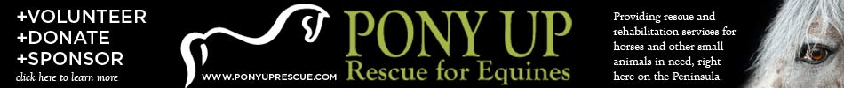 Pony Up Rescue for Equines