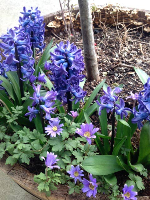 Wshg Net Blog Enjoy The Early Spring Color Splash